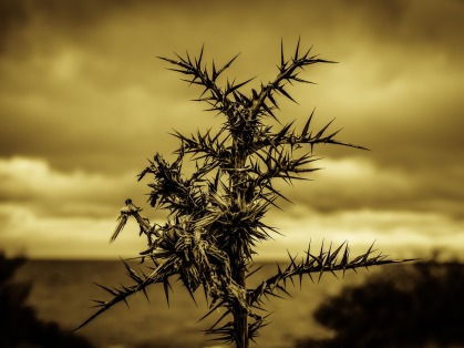 thorns-2013825_1920